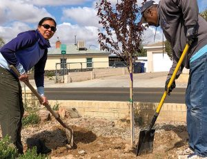 Juan Tabo Hills Tree Planting