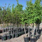 Trees-Neighborwoods