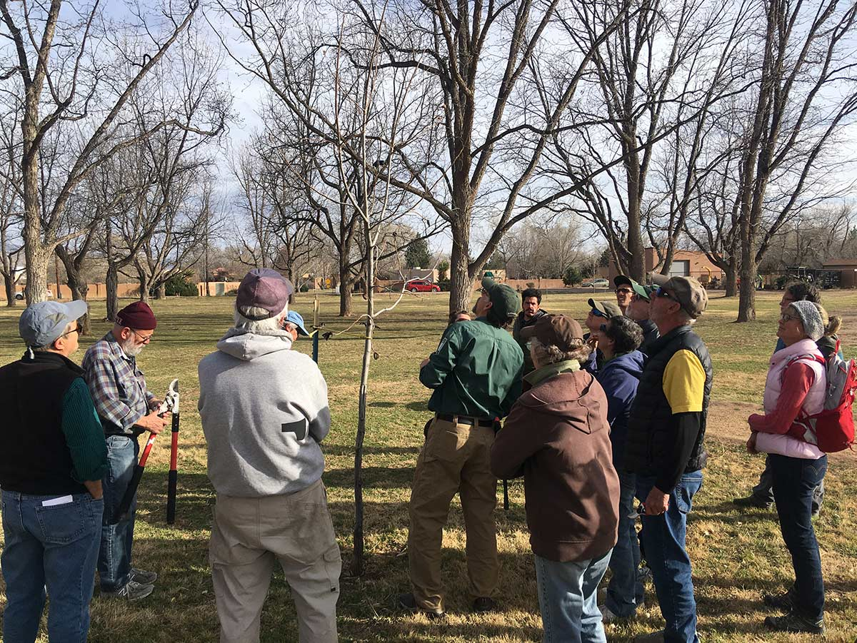 Tree Stewards Pruning Class