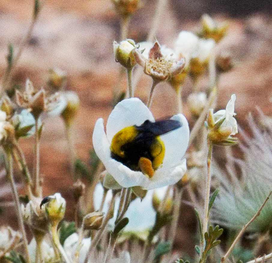 Morrisons bumble bee