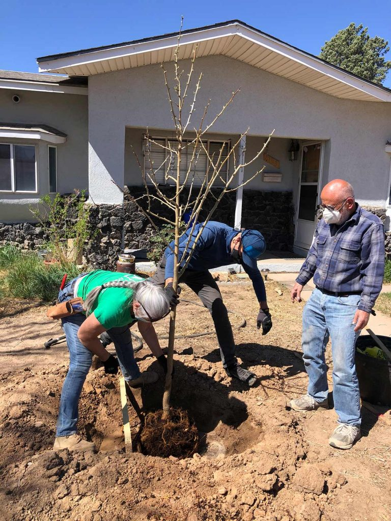 Facebook partners with Tree New Mexico to plant in Los Lunas
